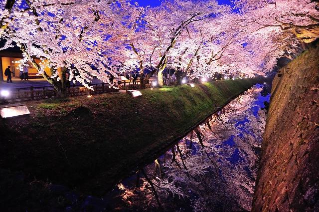日本三大名園の一つ「兼六園」で桜見物